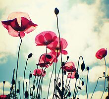 Pink Poppies by Joshua Greiner