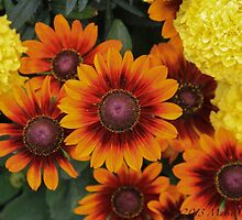 Stratford Blooms by Marie  Cardona