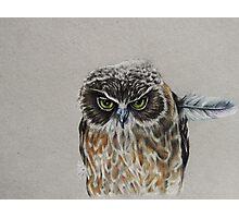 Grumpy Owl Photographic Print