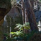 Tree Ferns Chasms - Gardens of Stone by garts