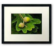 Mighty Oaks From Little Acorns Grow Framed Print