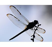 silhoutte of a dragonfly Photographic Print