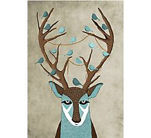 The deer Photographic Print