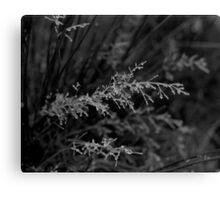 Frozen grass - Ogden, Halifax, UK Canvas Print