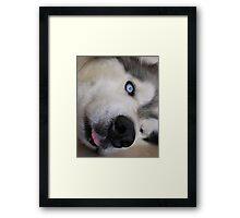 Goofy Lobo Framed Print