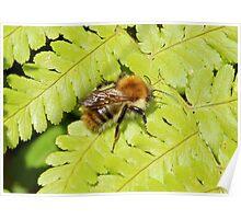 Fern & Bee Poster
