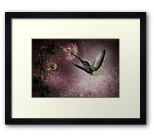 The Flower Seeker Framed Print