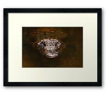 Everglades Alligator Framed Print