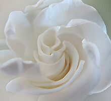 ~ Sweet Gardenia ~ by Brenda Boisvert