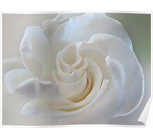 ~ Sweet Gardenia ~ Poster