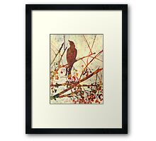 """Remember the Song Birds? # 8"" Framed Print"