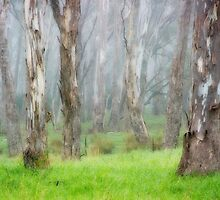Morning Mist by Barrie Turpin