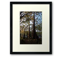 Three Rivers Cypress Trees Framed Print