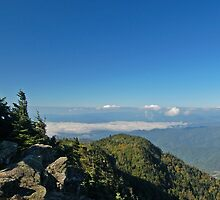 Top of Roan Mountain by C David Cook