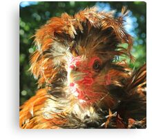 Spike the Firebird - Frizzled Polish Rooster Canvas Print