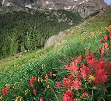 Summer Paint Brush - Indian Peaks Wilderness by Teresa Smith
