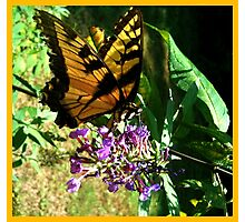 Butterfly Wings Series Photographic Print