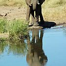 Elephant silhouetted into petes pond by jozi1