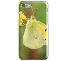 The Clouded Yellow - Colias croceus iPhone Case/Skin