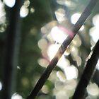 light through branches by Leeanne Middleton