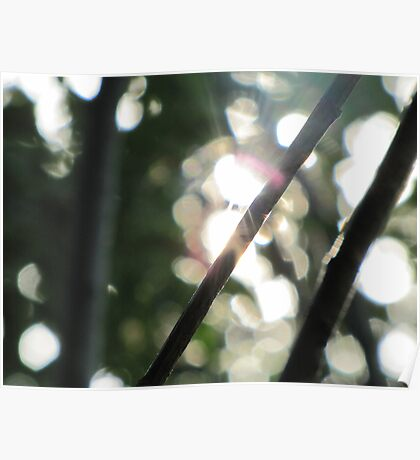 light through branches Poster