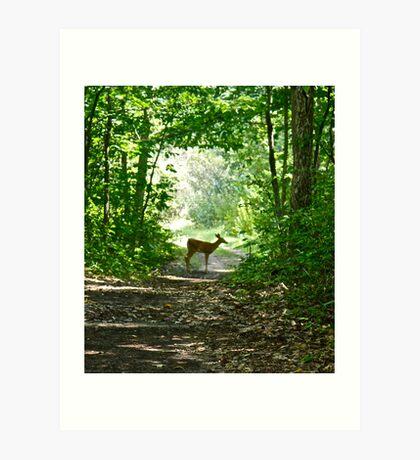 Deer xing Art Print