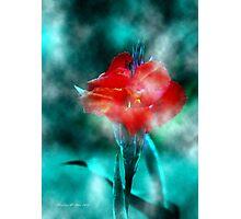 ~ Calla In The Mist ~ Photographic Print