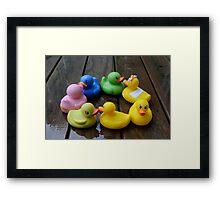 Duck, Duck, Duck...Wait, Where's the Goose? Framed Print