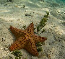 Starfish at Owen Island by tkrebs