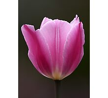 Focal Length Confinement / Tulip Photographic Print