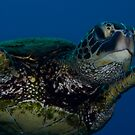 Green Turtle by tkrebs