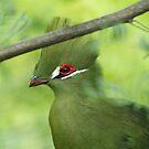 Green Bird of Beauty by kellimays