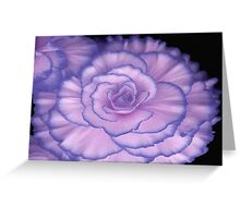 Violet Beauty Begonia ©  Greeting Card