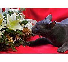 Spot's First Bouquet Photographic Print