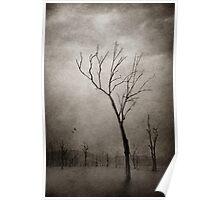 Treefingers - Dawn, Lake Moogerah Poster