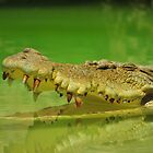 Smiling Croc in a Green Sea by ArtCooler