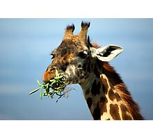 Hungry Photographic Print