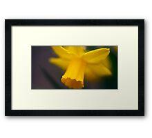 Daffodil... Framed Print