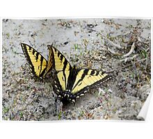 Rocky Mountain Butterflies Poster