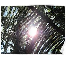 Sunshine through the pine needles Poster