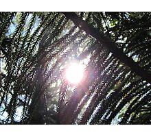 Sunshine through the pine needles Photographic Print