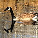 Reflected!!! by Larry Trupp
