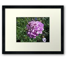 Insect on flower 2 Framed Print