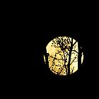 The Golden Moon in Spring by kelleygirl