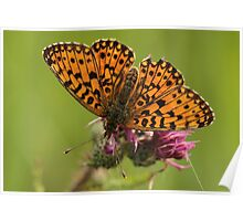 2and Generation Pearl Bordered Fritillary Poster
