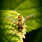 Hoverfly by DonMc
