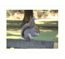 Squirrel on a bench Art Print