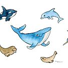Sea mammals by Macy Wong