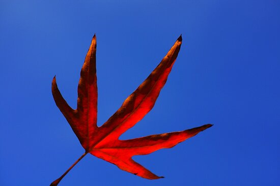 vermillion leaf by Karen E Camilleri