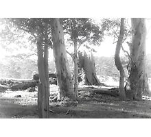 Rural Scene in Mono Photographic Print